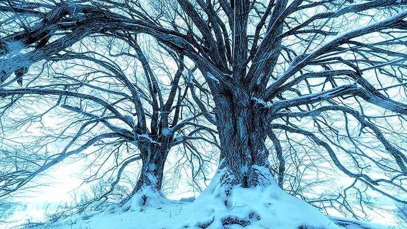 Snowy Blue Trees Chromebook Wallpaper ...
