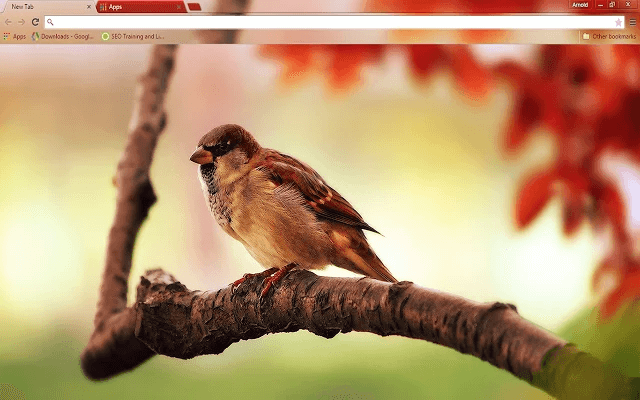 Free Sparrow Google Chrome Theme