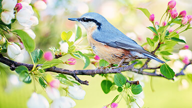 Spring Bird Google Background