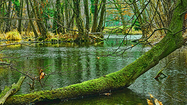 Swamp Trees Google Background