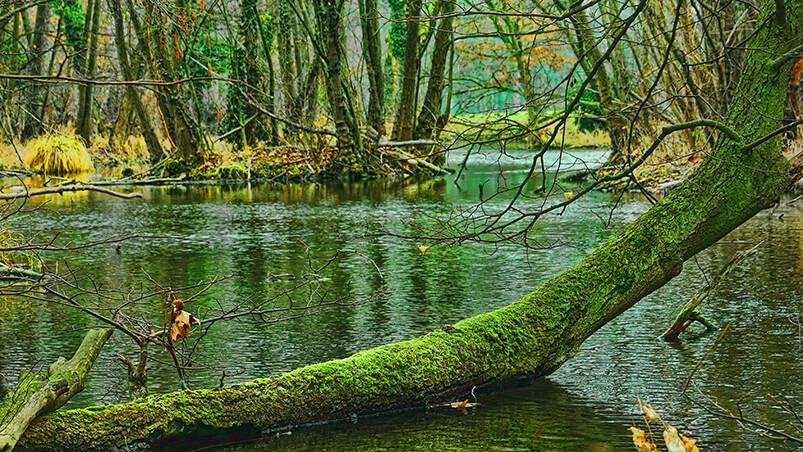 Swamp Trees Google Background ...