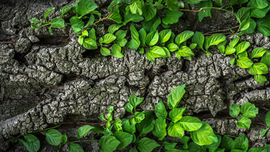 Tree Bark Chromebook Wallpaper