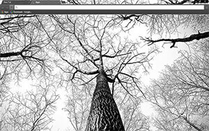 Tree Branches Chrome Theme