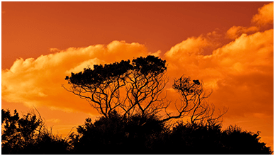 Trees In The Sunset Chromebook Wallpaper