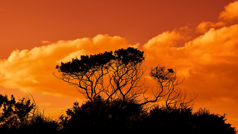 Trees In The Sunset Chromebook Wallpaper ...