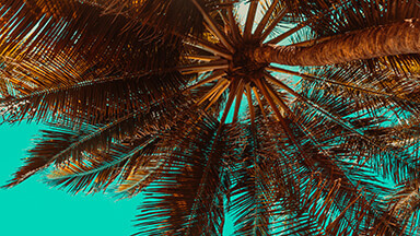 Tropical Palm Tree Google Background