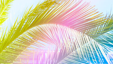 Tropicana Google Background