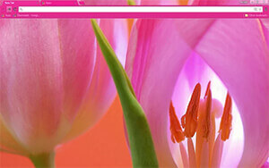 Tulips Chrome Theme