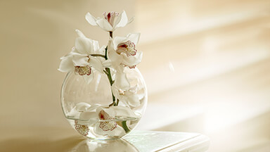 White Orchid Flowers Chromebook Wallpaper