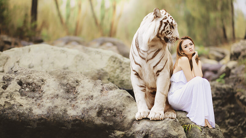 White Tiger 4K Chromebook Wallpaper ...