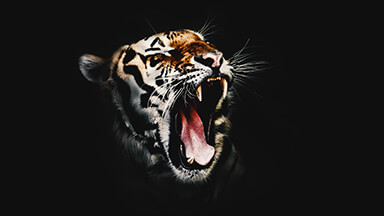 Wicked Tiger Google Background