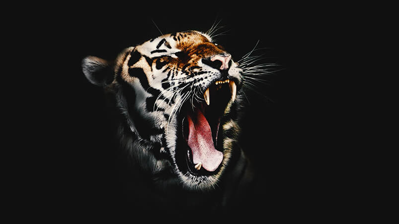 Wicked Tiger Google Background ...