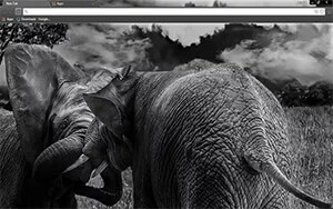 Wild Elephants Chrome Theme