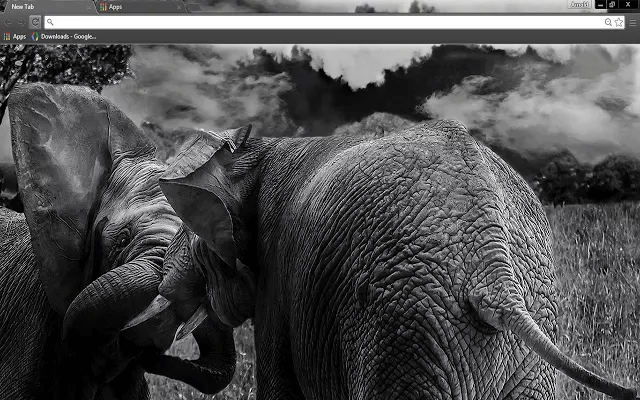 Free Wild Elephants Google Chrome Theme