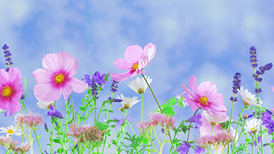 Wild Flowers Google Background