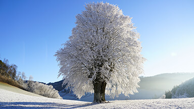 Wintry Tree Google Background