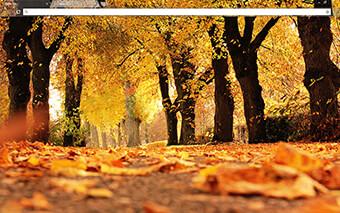 Autumn Trees Google Chrome Theme