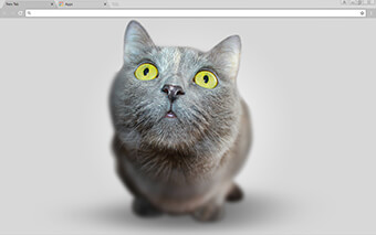 Big Head Kitten Google Chrome Theme