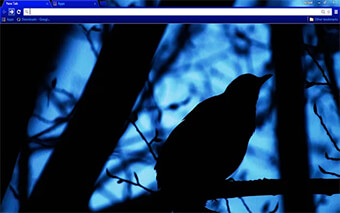 Black Bird Google Chrome Theme