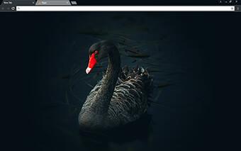 Black Swan Google Chrome Theme