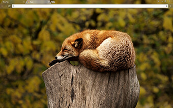 Brown Fox Google Chrome Theme
