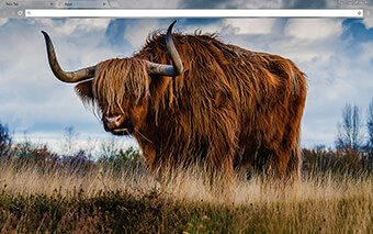 Bull Google Chrome Theme