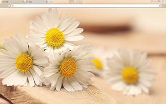 Daisy Days Google Chrome Theme