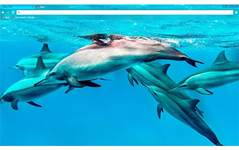 Dolphins Google Chrome Theme