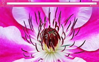 Flower Google Chrome Theme