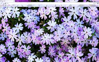 Flowers Google Chrome Theme