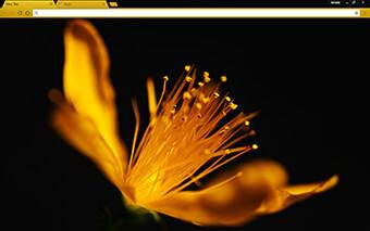 Golden Flower Google Chrome Theme