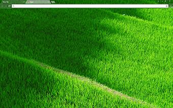 Grassy Terraces Google Chrome Theme