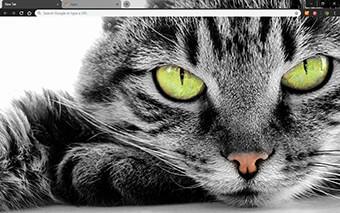 Green Eyed Cat Google Chrome Theme