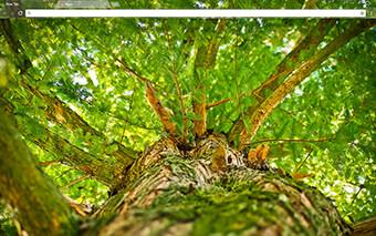 Green Tree Google Chrome Theme