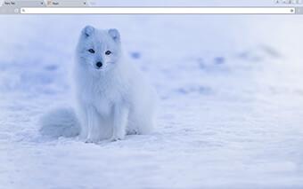 Iceland Fox Google Chrome Theme