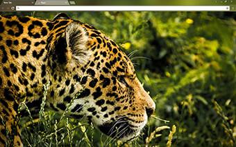 Jaguar Google Chrome Theme