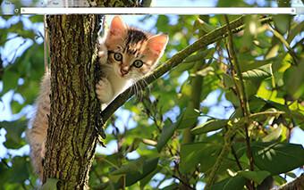 Kitten In Tree Google Chrome Theme