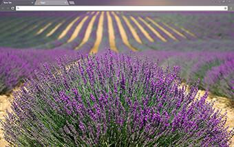 Lavender Google Chrome Theme