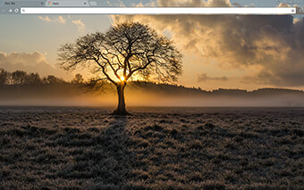 Lone Tree Google Chrome Theme