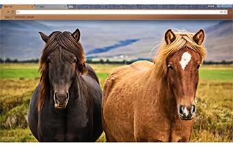 Love Horses Google Chrome Theme