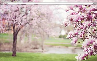 Magnolia Trees Google Chrome Theme