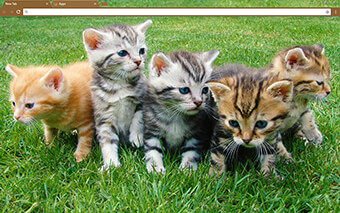 More Kittens Google Chrome Theme