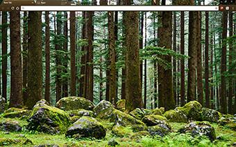 Mystery Forest Google Chrome Theme