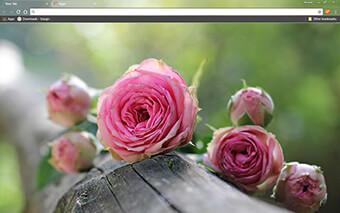 Natural Pink Roses Google Chrome Theme