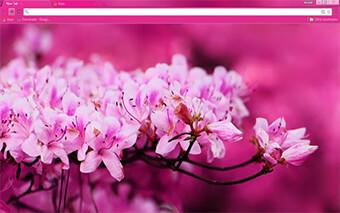 Pink Blossom Google Chrome Theme