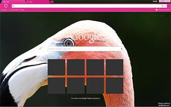 Pink Flamingo Google Chrome Theme