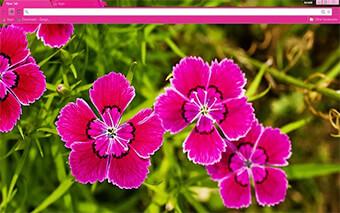 Pink Flowers Google Chrome Theme
