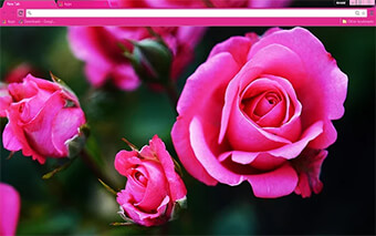 Pink Roses Google Chrome Theme