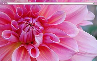 Pinkest Flower Google Chrome Theme