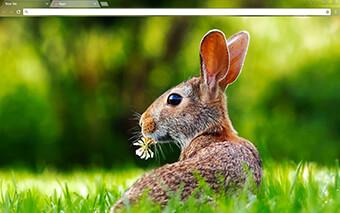 Rabbit Google Chrome Theme